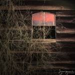 """Barn with Dead Vines and Window"" by joegemignani"