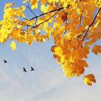 Autumn Leaves Art Prints & Posters by James Hanlon