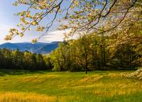 Dogwood Blooms in Cades Cove