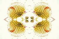 Multiplicity - Coneflower Abstract
