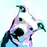"""Pit bull - Puzzled - Pop Art"" by wcsmack"