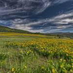 """flowers in Utah"" by Landscapes"