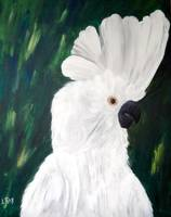 Grand Cockatoo