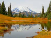 Beauty Of Autumn - Mount Rainier National Park