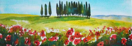 Poppies and Meadow