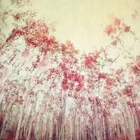 The Red Forest Art Prints & Posters by Priska Wettstein