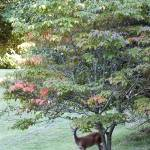 """""""Deer Under A Tree"""" by Kimmary"""