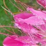 """""""Balancing raindrops"""" by Anewsgal"""
