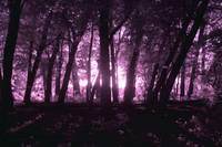 Woods in Infrared