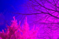 Trees in Infrared