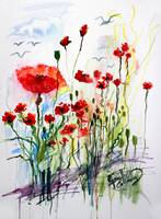 Tall Red Poppies Flower Field