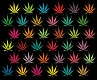 CANNABIS LEAF MULTI COL PATTERN