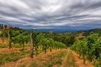 Vinyards on a Stormy Day