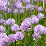 """Clover-Bee_DSC_0887"" by FindleyPhoto"