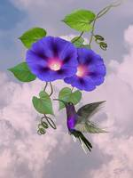 Morning Glory and Violet Hummingbird