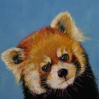 Red Panda Art Prints & Posters by Michael Creese