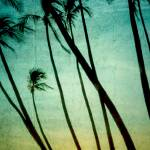 """Tilting Palms"" by boppintheblues"