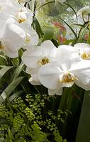 White Orchids3
