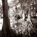 """lacassine bayou"" by wakebob"