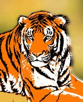 TIGER-3 (LARGE) FULL