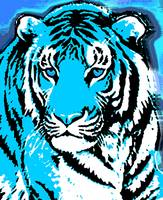 TIGER-3 (LARGE) BLUE