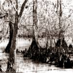 """lacassine bayou2"" by wakebob"