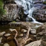"""""""Ramsey Cascades and Log"""" by cdomenig"""