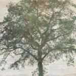 """Black Alder Tree"" by CoraNiele"
