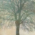 """""""Birch Silhouette"""" by CoraNiele"""