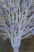 Bare Blue Tree