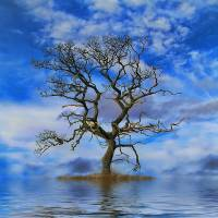 Tree on an Island Art Prints & Posters by David Harnetty