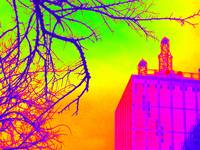 Multi-color Downtown Dallas &  Bare Tree