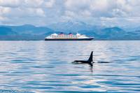 Orca and Cruise Ship