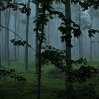 Foggy Forest Art Prints & Posters by Terry Osterhout