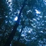 """Peering Through the Trees"" by DigitalFantastique"