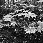 """Rainy Leaves"" by DigitalFantastique"