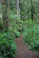 Fern Forest Walk