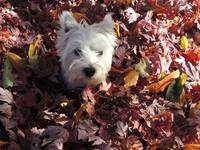 Going Into Autumn With Miss Daisy
