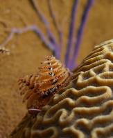 Christmas Tree Worms and Sea Fans 12-27-11
