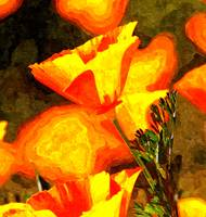 Mojave Poppies