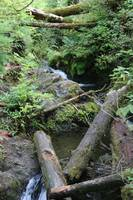 Log Jam in Rainforest Stream