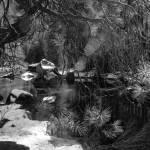 """""""Yosemite_2013_02_17-5734"""" by Mun_Sing"""
