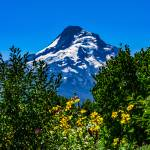 """Mt Hood with flowers"" by memoriesoflove"