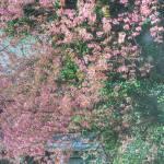 """RolandPark Magnolia"" by nahone"