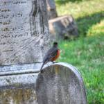 """Baltimore Oriole at St Mary in Hampden"" by nahone"