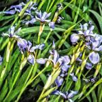 """""""BMore Iris"""" by nahone"""