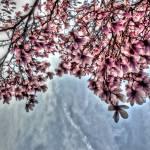 """BMore Magnolia"" by nahone"