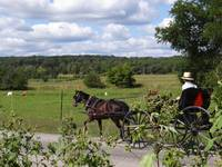 A horse and carriage ride in Amish country