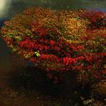 """Autumn Approaches"" by RCdeWinter"