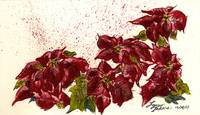 Poinsettia Pop 5X8